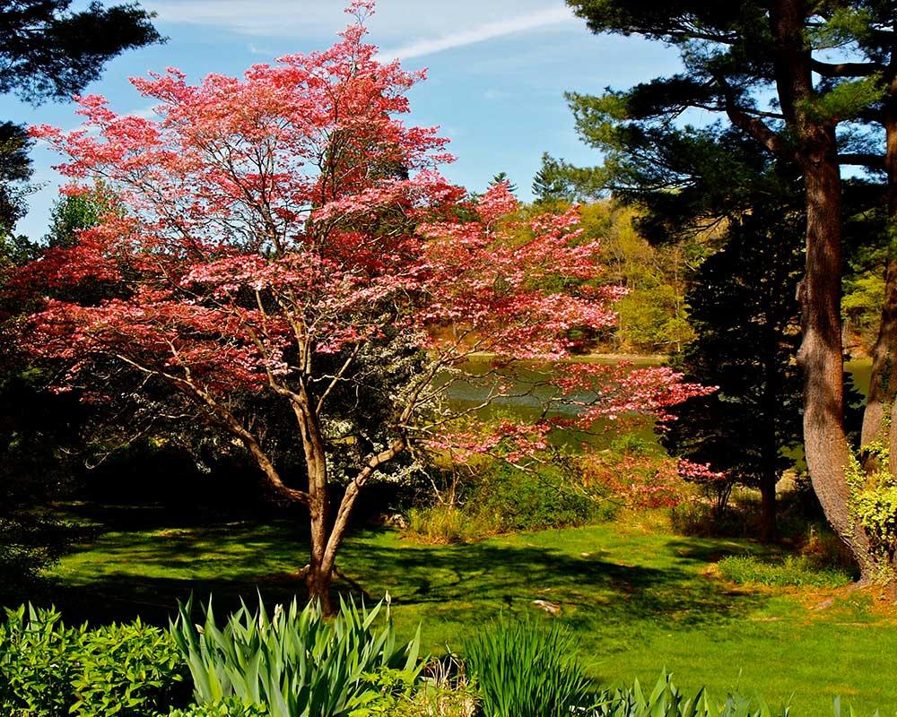 Smithsonian Notable Gardens | Cohasset Garden Club